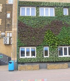 School's living wall will improve air quality