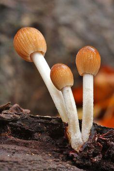 fungi Nick Cantle fungus