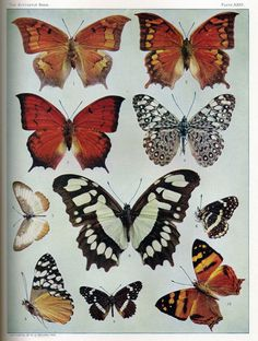 Nest of Posies: rare book collection of botanical & butterfly printables