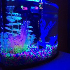 1000 images about glow fish and tank ideas on pinterest for Glow in the dark fish tank