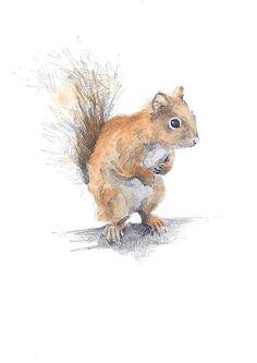 Red Squirrel by Hannah Longmuir