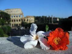 Rome take a breath