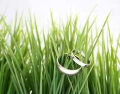rings in the grass