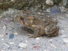 Frog on steps.