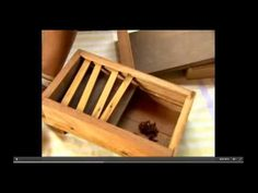 Biólogo explica como fazer a divisão de colméias de abelhas nativas Jata...