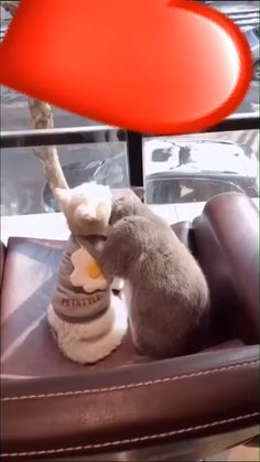 Cute cats and kittens lover, know and read here about your cute cats, cute kittens, newborn kittens, and cute baby cats. Cute Cat Gif, Cute Funny Animals, Funny Animal Pictures, Funny Cats, Cute Cats And Kittens, Kittens Cutest, Video Chat, Cat Tags, Funny Cat Videos