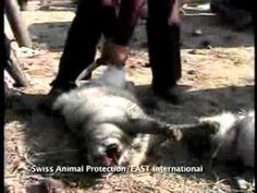 Kunstpelz ist echt - Eine Kampagne von Animals' Liberty | AnimalsUnited | Eden Lumaja | Sandy P.Peng | WAHRO