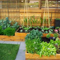 A super healthy (and neat) vegetable garden