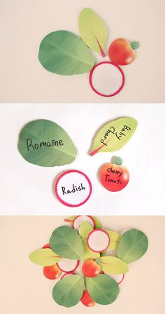 Display your love of healthy eating and cute stationery with the Green Salad Sticky Note Set! This set includes 80 sheets of sticky notes in 4 designs: romaine, radish, baby chard, and cherry tomato. It's a cute way to leave messages and reminders to eat healthy wherever you are! ^.~*