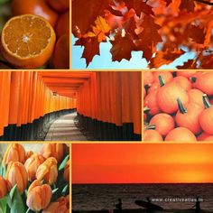 Orange #moodboard | Because it is October the month of Orange Glory. So we created this  moodboard to celebrate the bright and refreshing cheer of Orange color.