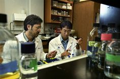 This photo shows Yoshihiro Kawaoka working on his lab with lots of deadly viruses.