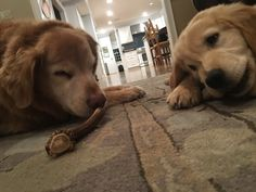 My dogs are very intent with their dog treats