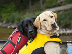 K-9 Canoeing Trips - 5 paddling routes that are for the dogs