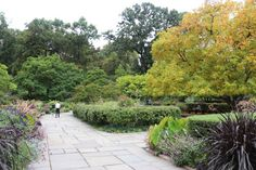 f you are within reach of New York City, visit this early fall iteration of the English garden before the 21st of October, when all the summer annuals will be removed, and tens of thousands of spring bulbs will be planted for next spring.   And if you are a little late, walk north to the French-style garden where the Korean chrysanthemums on display might just blow your mind.   Gardenista ; English garden ; Central Park
