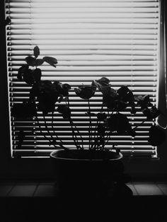 #blacknwhite #black&white #flower #flowers #window