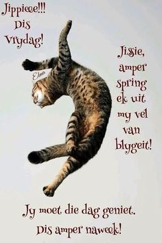 Goeie Nag, Goeie More, Afrikaans Quotes, Friday Humor, Good Morning Wishes, Emoticon, Van, Movie Posters, Mornings