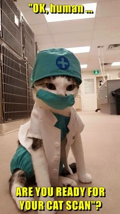 """""""OK, human . ARE YOU READY FOR YOUR CAT SCAN""""? - LOLcats is the best place to find and submit funny cat memes and other silly cat materials to share with the world. We find the funny cats that… Cute Funny Animals, Funny Animal Pictures, Cute Baby Animals, Wild Animals, Silly Cats, Cute Kittens, Funny Cat Memes, Funny Cats, Funny Humor"""