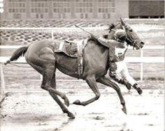 O jóquei americano Nate Hubbard conseguiu terminar a corrida em segundo lugar agarrado ao pescoço do seu cavalo, em 1989. Seu cavalo foi empurrado por outra égua e escorregou no chão molhado, fazendo com que Hubbard fosse desmontado, mas antes que caísse no chão, conseguiu se agarrar ao animal.