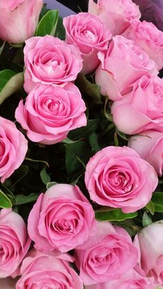 Light Pink Flowers, Luxury Flowers, Shabby Flowers, Pink Roses, Beautiful Flowers Wallpapers, Beautiful Rose Flowers, My Flower, Pretty Flowers, Flower Boutique