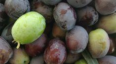 Sådan laver du oliven spiselige