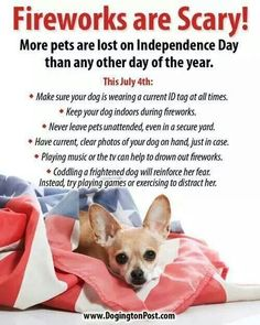fourth of july dog quotes
