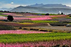 No te vas a creer que la floración de Cieza esté en España. Un paisaje exótico e increíble