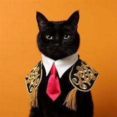 木野聡子 Akiko Kino on – Cats. Beautiful Cats, Animals Beautiful, Fancy Cats, Cat Collars, Cute Funny Animals, Cat Love, Crazy Cats, Cool Cats, Cat Art