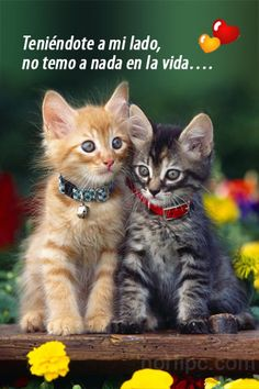 Here is huge collection of funny kitten pictures to brighten up your day. Kittens are considered as the cutest and the fluffiest pet in the history of pets. Cute Cats And Kittens, I Love Cats, Kittens Cutest, Orange Kittens, Baby Animals, Funny Animals, Cute Animals, Funniest Animals, Pretty Cats