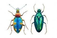 Watercolor beetles set by Lembrik's Artworks on @creativemarket