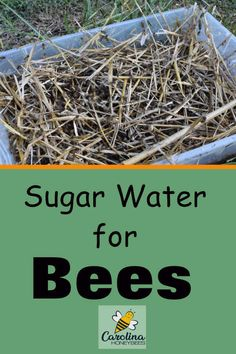 Why feeding honey bees sugar water is a good idea. How to make bee sugar water with the proper ratio . And when it is time to stop feeding bees sugar water. Sugar Water For Bees, Feeding Bees, Bee Facts, Beekeeping For Beginners, Bee House, Backyard Beekeeping, Birds And The Bees, Bee Friendly, Beneficial Insects