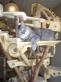 DomusfeliS - special playzones for cats - mod. Bastethome, sculptures for cats, untreared precius wood: plum, apricot, poplar, birch, bamboo, oak and piracanta. #catcastle #cattower #catcondo #cattoy #petdesign #catforniture #catscratchforniture #catenclosure #cattree Plum Apricot, Cat Castle, Cat Enclosure, Cat Condo, Cat Tree, Animal Design, Birch, Bamboo, Sculptures