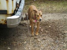 Tethering dogs now illegal in Springfield, MO