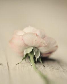 SimplyMe ll Eternal Love
