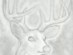 Line Drawings Of Animals Deer : How to draw a deer head buck dear step 10 drawing