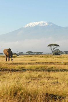 On Thursday 3 September 2015 at around a.m, Chaeli Mycroft, a wheelchair user and an ability activist, became the first female quadriplegic to summit Mount Kilimanjaro – the highest free-standing mountain on the planet. Kenya Travel, Africa Travel, African Animals, African Safari, Monte Kilimanjaro, Photographie Portrait Inspiration, Tanzania Safari, Out Of Africa, Photos Voyages