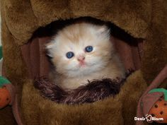 A house is not a home without a pet. - Anonymous