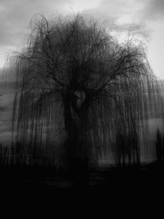 Weeping Willow tree.  In the dark, in the Fall, covered in snow, or bare of leaves, there is always beauty to see.