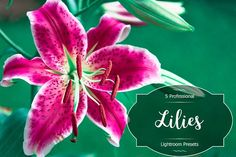 Lilies Lr Presets by FaeryDesign on Professional Lightroom Presets, Creative Sketches, Paint Markers, Pencil Illustration, Business Card Logo, Watercolor And Ink, Lilies, Painting & Drawing, Free Design