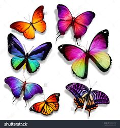 Many Different Butterflies Flying, Isolated On White Background Стоковые фотографии 140552710 : Shutterstock