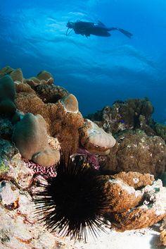 Die Seychellen gehören zu den schönsten Inseln der Welt und bieten im Urlaub unglaubliche Taucherlebnisse http://www.seychellenreisezeit.com/seychellen-urlaub/ #Seychellen #Urlaub #tauchen