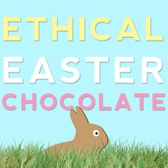 Food for thought... where does chocolate come from?