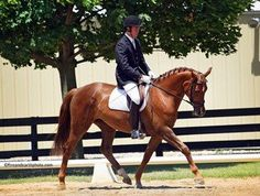 Excellent scores for this 2007 Hanoverian mare! Consistently scores in the high 60's-mid 70's at Training and 1st level. Frequent 8's on elastic gaits. Inspected and Elite eligible. Brave in new places, excellent work ethic and tries hard to please! $25,000