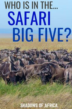 Who's in the safari big five? Here's how to spot the most incredible animals on your African safari trip! Add this to your travel bucket list! Rwanda Travel, Africa Travel, Ethiopia Travel, Safari Adventure, Adventure Travel, Alaska Travel, Alaska Cruise, Tennessee Vacation, African Safari