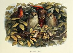 """Illustration by Richard Doyle. From """" In Fairy-Land: A Series of Pictures From the Elf-World"""" . (London Longmans From the New York Public Library. Moritz Von Schwind, Richard Doyle, Elves And Fairies, Finger Plays, Owl Always Love You, Owl Art, Fairy Art, Sculpture, The Elf"""