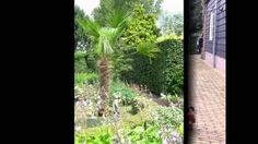 de bloemengaarde - YouTube