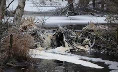 Talvivaaran ympäristökorvaukset tänään oikeudessa - paikalla nelisenkymmentä asianomistajaa