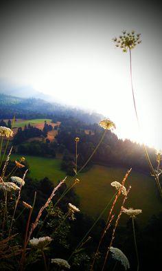 Mornin....sunshine.