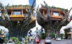 House in a Treee