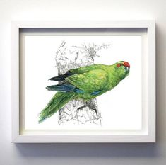 New Zealand native bird Kākāriki NZ parakeet illustrated | Etsy Parakeet, Ink Painting, Large Prints, Watercolor And Ink, New Zealand, Nativity, Wildlife, Bird, Wall Art