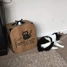 Snoop not sharing his pod with his sister #cat #catsofinstagram #cats_of_instagram #catfurnature #catfurniture #catsinboxes #cattoy #INSTACAT_MEOWS #cutecat #PurrMachine #catsinboxes #catbox #Excellent_Cats #BestMeow #dailykittymail #thecatniptimes #catcube #catpod #ArchNemesis #FlyingArchNemesis #myindoorpaws #ififitsisits #cutecatcrew #catchalet #catnip #themeowdaily #kitty #catpyramid #miuandmaosfurriends